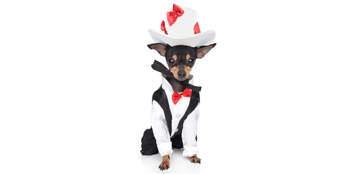 tuxedodog